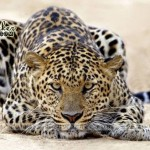 Animals-Wild-Life-Jungle-(FunRocker.Com)-05