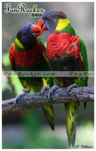 Natural-Love-Pictures-(FunRocker.Com)-03