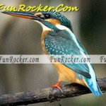Birds-(FunRocker.Com)-7