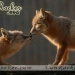 Natural-Love-Pictures-(FunRocker.Com)-05