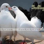 Natural-Love-Pictures-(FunRocker.Com)-08