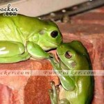 Natural-Love-Pictures-(FunRocker.Com)-09